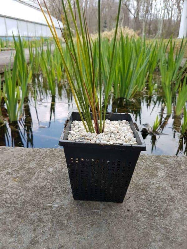 Pond Plant Basket
