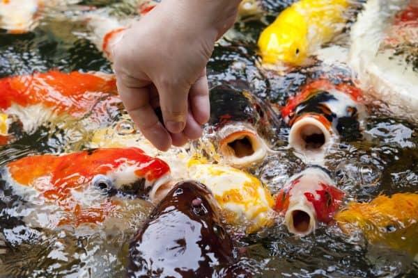Fish Care Aids